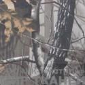 240D PU цв.C52 Серый лес